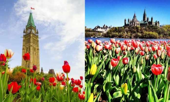 Festival de Tulipanes de Ottawa